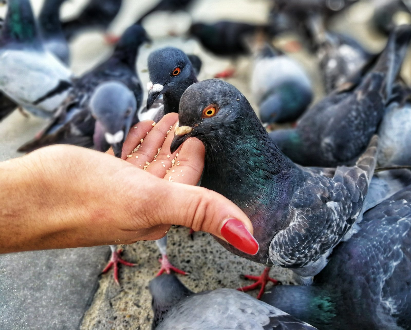 mobile photography - pigeons